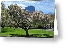 Boston Public Garden Spring Tree Boston Ma Greeting Card
