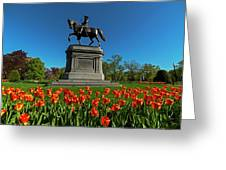 Boston Public Garden Tulips Boston Ma Greeting Card