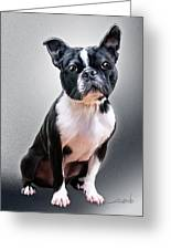 Boston Terrier By Spano Greeting Card