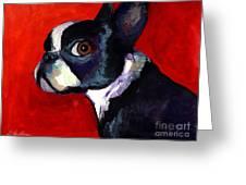 Boston Terrier Dog Portrait 2 Greeting Card by Svetlana Novikova