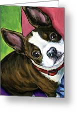 Boston Terrier Looking Up Greeting Card