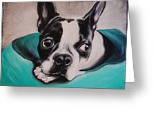 Boston Terrier Portrait Greeting Card
