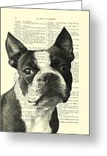 Boston Terrier Portrait In Black And White Greeting Card