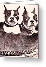 Bostons In A Basket Greeting Card