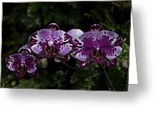 Botanic Garden Orchid Bouquet 3 Greeting Card