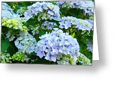 Botanical Art Prints Floral Hydrangea Flower Garden Baslee Greeting Card