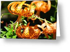 Botanical Art Prints Orange Tiger Lilies Master Gardener Baslee Troutman Greeting Card