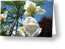 Botanical Landscape Trees Blue Sky White Irises Iris Flowers Greeting Card