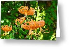 Botanical Master Gardens Art Prints Orange Tiger Lilies Baslee Troutman Greeting Card