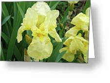 Botanical Yellow Iris Flower Summer Floral Art Baslee Troutman Greeting Card