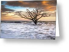 Botany Bay Edisto Island Sc Boneyard Beach Sunset Greeting Card by Dave Allen