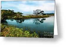 Botany Bay Marshland Greeting Card