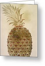 Botany: Pineapple, 1585 Greeting Card