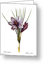 Botany: Saffron Greeting Card by Granger