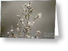 Botswana Wildflower  Greeting Card