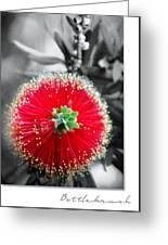 Bottlebrush Callistemon Greeting Card