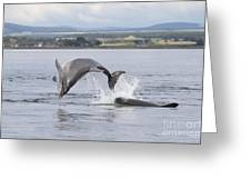 Bottlenose Dolphins - Scotland #11 Greeting Card