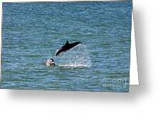 Bottlenose Dolphins In The Ocean Greeting Card