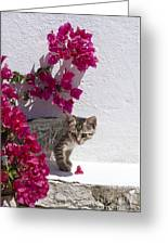 Bougainvillaea Tabby Greeting Card