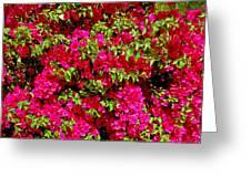 Bougainvillea And Foliage Greeting Card