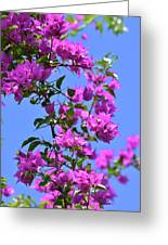 Bougainvillea And Sky Greeting Card