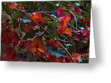 Bougainvillea At Joe's Secret Garden Greeting Card