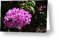 Bougainvillea Bloom Greeting Card