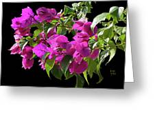 Bougainvillea Cutout Greeting Card