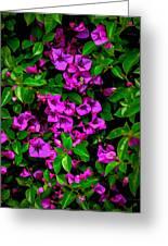 Bougainvillea Floral Print Greeting Card