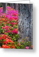 Bougainvillea Forever Greeting Card