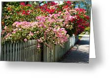 Bougainvillea In Old Eau Gallie Florida Greeting Card
