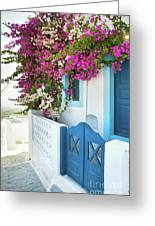 Bougainvillea In Santorini Island Greeting Card