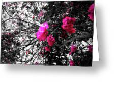 Bougainvillea Invasion Greeting Card