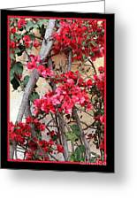 Bougainvillea On Mission Wall - Digital Painting Greeting Card