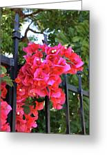 Bougainvillea On Southern Fence Greeting Card