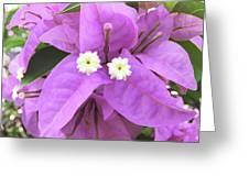 Bougainvillea Petals Greeting Card