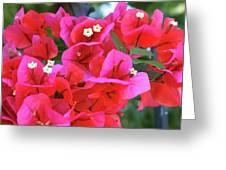 Bougainvillea Square Greeting Card