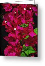Bougainvillea / Textured  Greeting Card