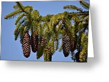 Boughs Of Pine Cones Greeting Card