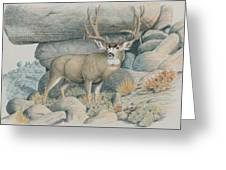 Boulder Buck  Greeting Card
