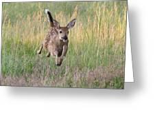 Bounding Bambi Greeting Card