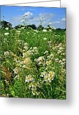Bouquet Of Wildflowers Along Country Road In Mchenry County Greeting Card