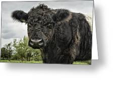 Bovine Beauty 2 Greeting Card