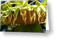 Bowing Sunflower Greeting Card