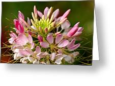 Bowl Of Beauty Greeting Card