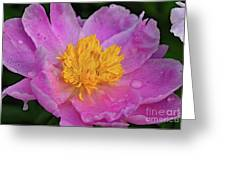 Bowl Of Beauty Peony Catching The Rain Greeting Card