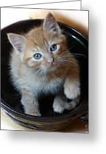 Bowlful Of Kitten Greeting Card
