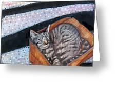 Box Cat Greeting Card