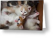 Box Full Of Kittens Greeting Card by Garry Gay