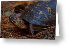 Box Turtle 2 Greeting Card
